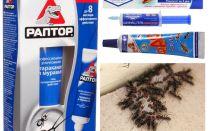 Die besten Ameisenprodukte
