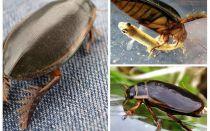 Käfer Käfer