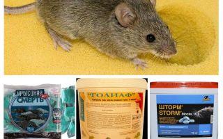 Gift von Mäusen