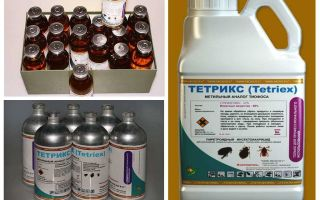 Tetrix Mittel gegen Wanzen