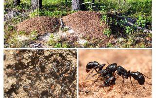 Gerät Ameisenhaufen