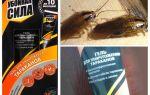Abhilfe Schädigende Kraft von Kakerlaken