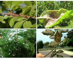Wie man Blattläuse in den Bäumen loswird