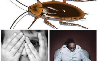 Warum haben Menschen Angst vor Kakerlaken?