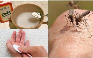 Mosquito beißt Sodalösung für Kinder und Erwachsene