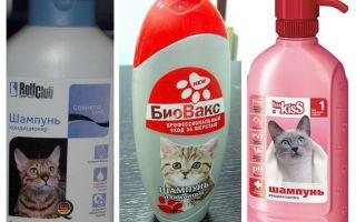 Floh Shampoos für Kätzchen und Katzen