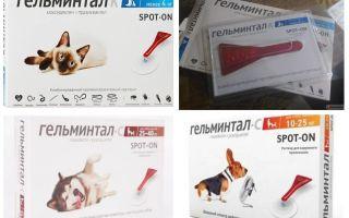 Tropfen Gelmintal auf den Widerrist für Katzen und Hunde