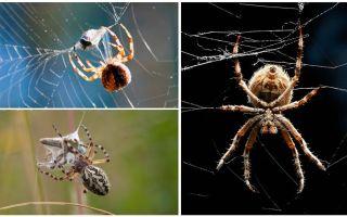 Wie die Spinne ein Netz spinnt