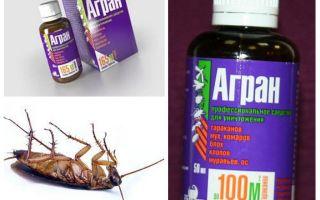 Agran Heilmittel für Kakerlaken