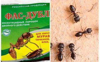 Bedeutet Fas-Double von Ameisen