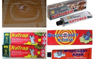Kleber für Ratten und Mäuse