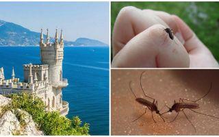 Gibt es Moskitos auf der Krim?