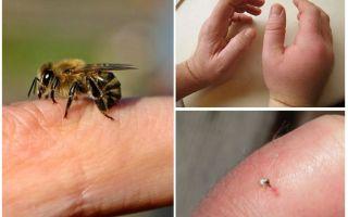 Was ist nützlicher Bienenstich für eine Person?