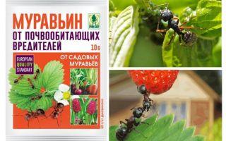 Ameisen 10g von Ameisen: Gebrauchsanweisungen und Bewertungen
