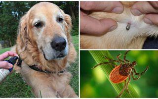 Sprays für Hunde gegen Zecken und Flöhe