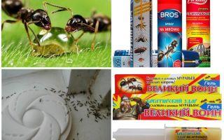 Wie man Ameisen und Ameisenhaufen zerstört