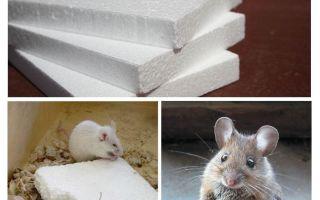 Nagen Mäuse Schaum