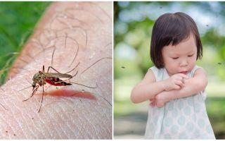Wie viele Tage dauert der Mückenstich?