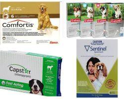 Wie man Flöhe bei Hunden, dem wirksamsten Mittel der Flöhe, loswird