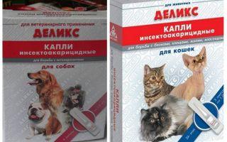 Köstliche Flohtropfen für Katzen und Hunde