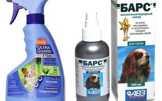 Das beste Flohspray für Hunde
