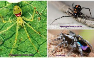 Die schönsten Spinnen der Welt
