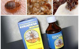 Cucaracha Heilmittel für Wanzen