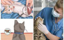 Wie man Flöhe bei einer Katze oder Katze zu Hause loswerden kann
