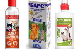 Das beliebteste und wirksamste Flohshampoo für Hunde