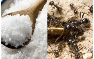 Salz gegen Ameisen im Garten