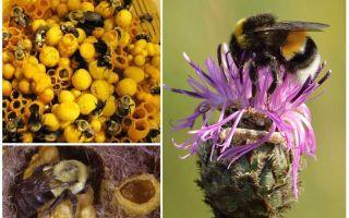 Hat Honig Hummeln?