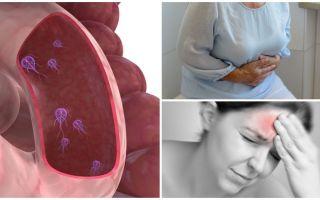 Wie man das Vorhandensein von Giardia im menschlichen Körper feststellen kann