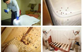 Wo verstecken sich Käfer in der Wohnung?