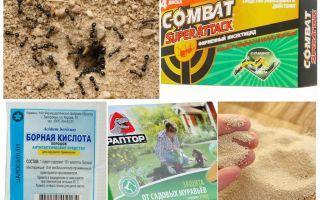 Köder für Ameisen
