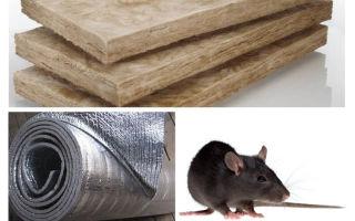 Welche Art von Isolierung essen keine Ratten und Mäuse