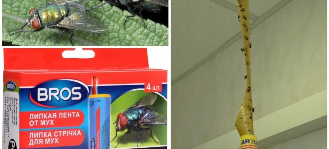 Geschäft und Volksmedizin für Fliegen