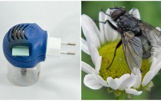 Fumigatoren aus Fliegen und Mücken im Auslauf
