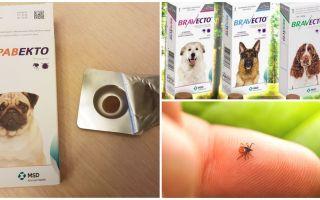 Tabletten Bravekto von Zecken für Hunde