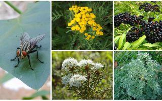 Welchen Geruch haben Angst vor Fliegen und Mücken