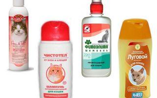 Die besten Floh-Shampoos