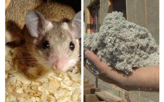 Welche Art von Isolierung essen keine Mäuse