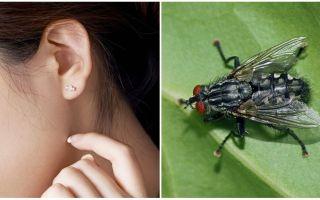 Wie bekomme ich zu Hause eine Fliege aus dem Ohr?