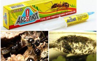 Absolut von Ameisen