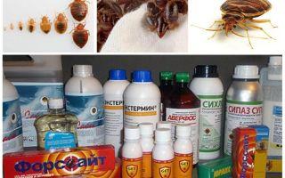 Gift für Bettwanzen zu Hause