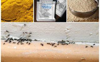 Geld von Ameisen im Haus auf dem Land