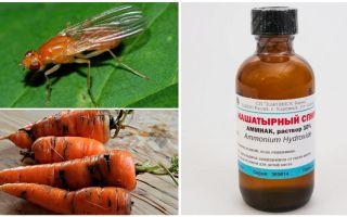 Kampf gegen Karottenfliege mit Ammoniak