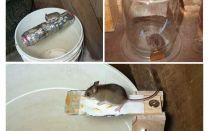Wie man eine Mausefalle mit eigenen Händen macht