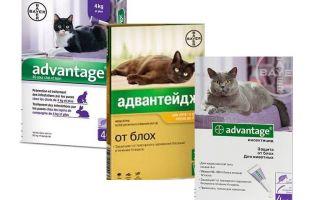 Vorteil Flohtropfen für Katzen