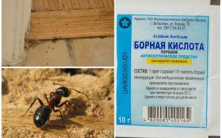 Wie man Ameisen von einem Holzhaus entfernt