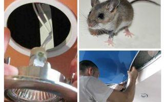 Wie man Mäuse in der Spanndecke loswird